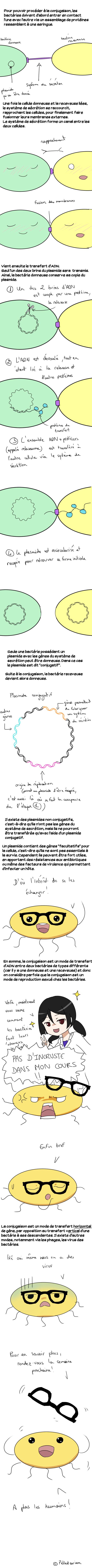 conjugaison2